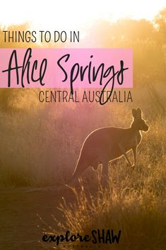 Find out all of the things to do in Alice Springs to explore more of Australia's epic outback and explore more of the outstanding Red Centre. Australia Country, Australia Beach, Visit Australia, Western Australia, Australia Trip, Travel Photos, Travel Tips, Travel Guides, Travel Destinations