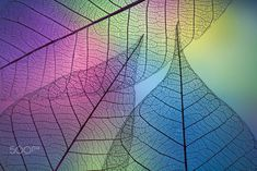 Photo Prismatic leafs by Shihya Kowatari on Collage Background, Background Pictures, Painting Digital, Dry Leaf, Patterns In Nature, Spring Colors, Science And Nature, Wallpaper Backgrounds, Pretty Backgrounds