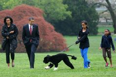 April 2009 The first family introduces Bo, their Portuguese water dog, to the world. Bill O'Leary / The Washington Post Bo Obama, Barack Obama Family, Barrack And Michelle, Michelle Obama, Malia And Sasha, Portuguese Water Dog, Female Names, Getting A Puppy, True Friends