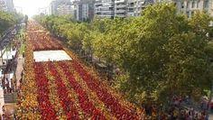 """""""Darwin en Cataluña"""", nueva entrada en mi blog, con mi opinión sobre el movimiento independentista catalán."""