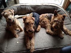 our three black & tans