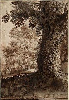 claude lorrain study of an oak tree - Google Search