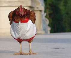 Unlikely Animals Wearing Clothes! - BuzzFeed Mobile