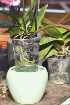 Il y a un vrai hiatus entre la perception que l'on a des orchidées, plante. There is a real hiatus between the perception that we have orchids, plants Gardening Magazines, Horticulture, Planting Flowers, Plants, Small Backyard Landscaping, Orchids, Garden Pathway, Indoor Plants, Garden Care