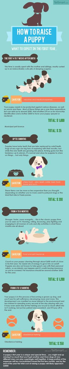How to Raise a Puppy: What to Expect in the First Year... Infographic - Tap the pin for the most adorable pawtastic fur baby apparel! You'll love the dog clothes and cat clothes! <3