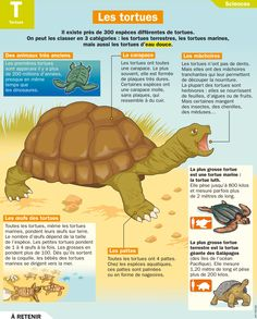 Fiche exposés : Les tortues                                                                                                                                                                                 Plus Life Science, Science Nature, Flags Europe, Turtle Crafts, French Immersion, Free Infographic, Teaching French, Learn French, Science Activities