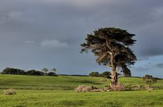 Discover the world through photos. South Australia, Victoria, World, Plants, The World, Plant, Planting, Planets, Peace