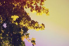 Check out Early autumn by simonalimona on Creative Market