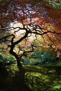 The Japanese Garden in Portland, OR