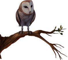 owl - See this image on Photobucket.