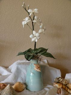 Sea Shell Orchid Plant