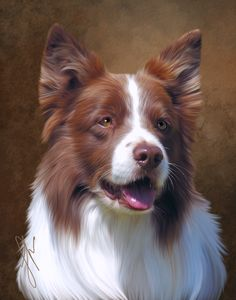 "Portrait of ""Bezel"" owned by Janice DeMello, Hob Nob Border Collies"
