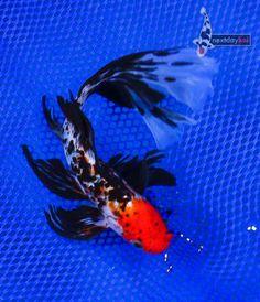 go air plane image v3M1qchi