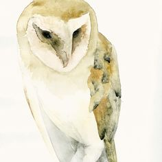 Barn Owl Fine Art Print drawn in water colour, this image stands out because of all the fine art features it uses including the dull affect the image has on viewers of the painting.