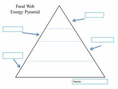 Ecological Pyramid Worksheet Food pyramid, food chains and cartoon ...