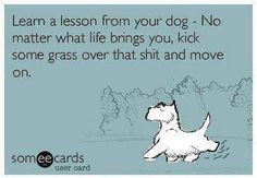 Lesson from your dog. No matter what life brings you, kick some grass over that shit and move on.                                                                                                                                                                                 More