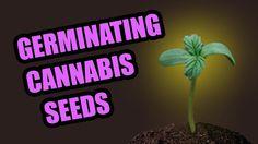 Crop King Seeds Germination