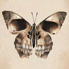 *Mariposa
