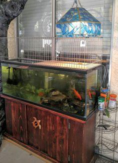 Aquatic Turtle Tank, Turtle Aquarium, Aquatic Turtles, Turtle Tank Setup, Turtle Tanks, Turtle Basking Area, Turtle Pond, Turtle Care, Pet Turtle