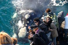 Whale Watching in Western Australia Travel With Kids, Family Travel, Whale Watching Season, Travel Stroller, Western Australia, Where To Go, Mammals, Seasons, Whales