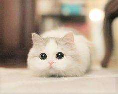 おめめクリクリ♡(^・ェ・^) ・ ・ ・ #ペットのおくすり #animal #pets #petstagram #mypet #instapet #dogs #cats #instacat#catstagram #catlover #ペット #アニマル #猫 #ねこすたぐらむ #にゃんすたぐらむ #にゃんだふるらいふ #ねこ#愛犬 #犬バカ部 #ねこ部 #ふわもこ部 #動物 #귀염둥이 #개스타그램 #냥스타그램 #犬の病気 #猫の病気 #犬の薬 #猫の薬