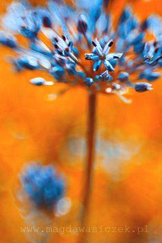 cool blue orange lovely