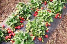 Grădinărit Archives - Perfect Ask Plants, Succulents, Vertical Garden Diy, Perfect Garden, Urban Garden, Climbing Roses, Strawberry Garden, Diy Backyard, Beautiful Gardens