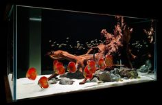 Aquarium Design Group. Personally,  I like a lot of aquatic plants, but with this design the main focus is on the fish.