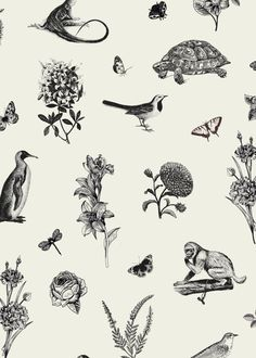 Darwin's Townhouse - Brand Identity & Photography In Shropshire Stunning Photography, Black And White Illustration, Darwin, Brand Identity, Townhouse, Design, Terraced House, Branding