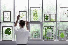 DIY cadre entre deux verres, DIY herbier, faire un herbier, un herbier tendance, déco tropicale, herbier et marbre, herbier métallique, cadre herbier, herbier sous verres, herbier encadré, plante verte dans la déco,