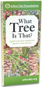 What Tree is That? The National Arbor Day Foundation's version of a tree identification tool. A series of pictures and questions are used like a dichotomous key to identify mystery trees by process of elimination. A very good animated interactive tutorial illustrates how to use a dichotomous key.