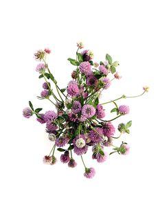 clover (mary jo hoffman)
