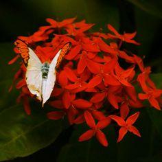 I like orange white butterfly