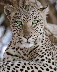 Amazing eyes…