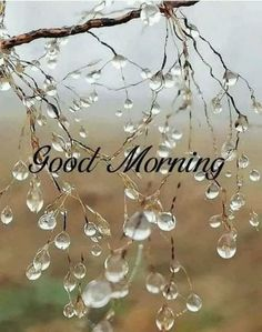 37 Good Morning Greetings Pictures And Wishes With Beautiful Images – FunZumo Good Morning Rainy Day, Good Morning Wednesday, Good Morning World, Good Morning Flowers, Good Morning Love, Rainy Days, Wednesday Coffee, Beautiful Morning Quotes, Lovely Good Morning Images