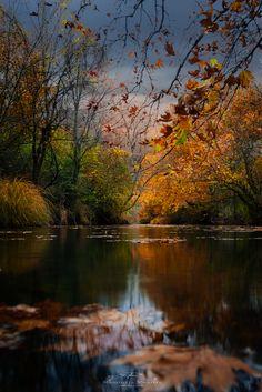 Autumn leaves - Greece