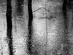 Regen, Wald, Schwarz-Weiß, Pfütze