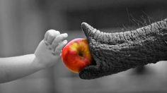 just for you. Elephant Walk, Elephant Love, Elephant Gifts, Funny Elephant, Elephant Trunk, Elephant Family, Beautiful Creatures, Animals Beautiful, Adorable Animals