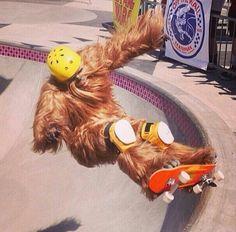 haha Chewbacca on a skateboard