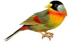 fugle010.png - Klik for at se i normal størrelse