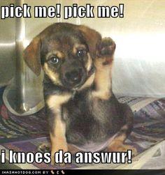 Cute-pups-with-funny-captions-teddybear64-17303595-352-375.jpg (352×375)