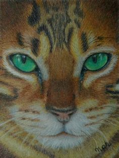 colored pencil cat