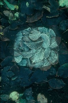 Andy Goldsworthy (born is a British sculptor, photographer and environmentalist living in Scotland who produces site-specific sculpture and land art. Land Art, Art And Illustration, Illustrations, Andy Goldsworthy Art, Ephemeral Art, Environmental Art, Outdoor Art, Art Plastique, Sculpture Art