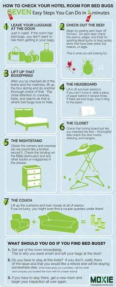 New Infographic: How To Check Your Hotel For Bed Bugs