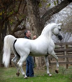Fotografia de hermoso y estiloso caballo blanco [19-11-17]