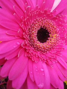 My wedding flowers! My favorite flower ever Pink Gerbera daisy