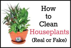 How to #Clean #Houseplants (Real or Fake)  http://www.teresasfamilycleaning.com/house-cleaning/how-to-clean-houseplants-real-or-fake/?utm_source=Pintrest&utm_medium=blog%20post&utm_campaign=Clean%20Houseplants%20post