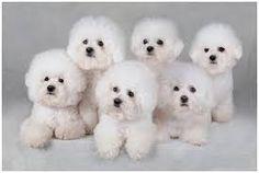 Resultado de imagen para cachorros de diferentes razas