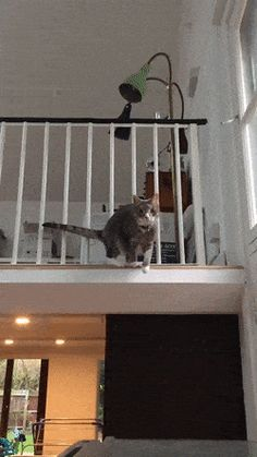 Mrs. Acrobat by gDisasters cats kitten catsonweb cute adorable funny sleepy animals nature kitty cutie ca
