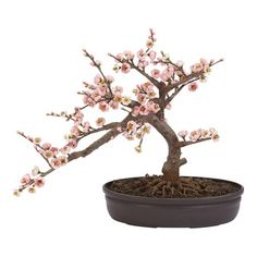 Cute office tree I can't kill and my cat can't try to eat! $43 Silk Cherry Blossom Bonsai Tree at Joss & Main!